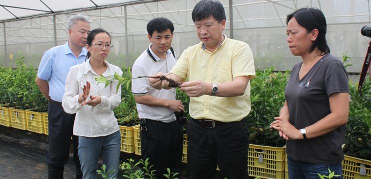 华中农大校长邓秀新院士考察柑桔试验站